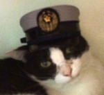 我が家の愛猫ヒロシの一日所長ぶりいかがですか?